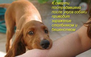 Что нужно делать, если укусила собака