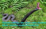 Оказание первой помощи при укусе змеи