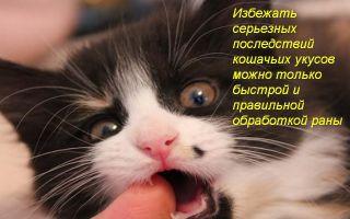 Что делать, если после укуса кошки опухла рука