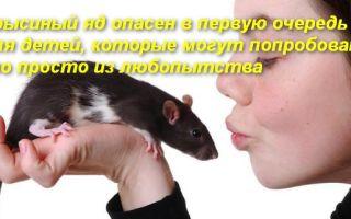 Что делать при отравлении человека крысиным ядом