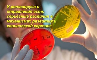 О том, как отличить ротавирус от отравления