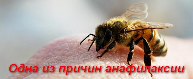 пчела сидит на коже человека