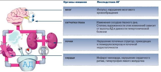 схема внутренних органов