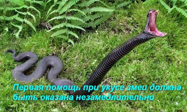 змея делает бросок
