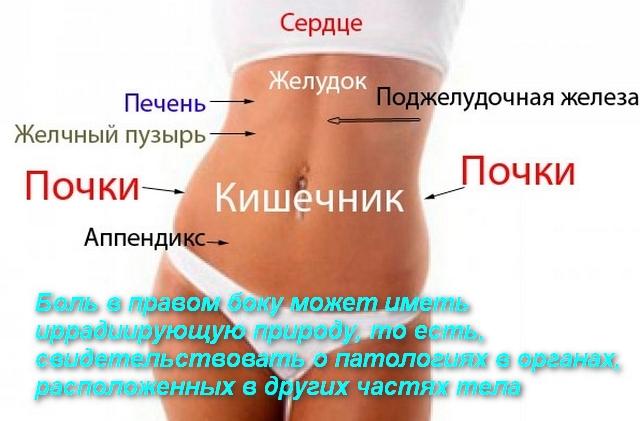 схема расположения внутренних органов человека