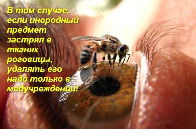 пчела сидит на глазу человека