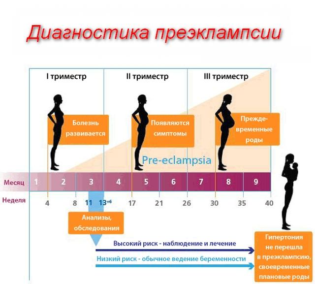 периоды возможного развития болезни