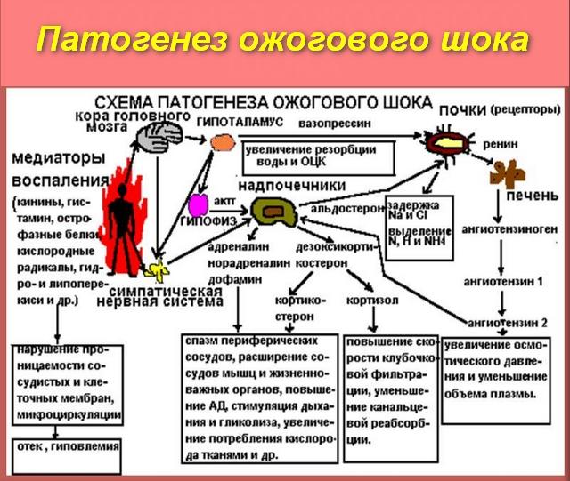 патогенез болезни