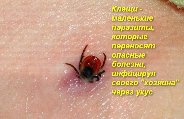 паразит впился кожу человека