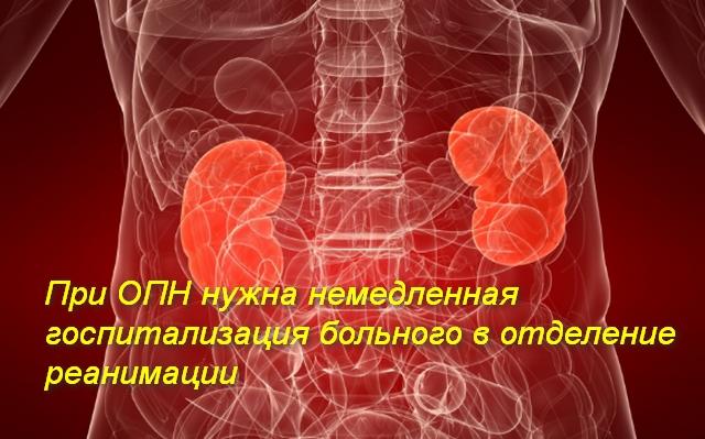 почки в теле человека