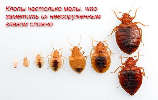 увеличенный внешний вид паразитов