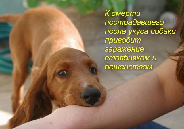 собака кусает за руку человека