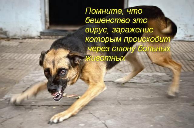 бродячая собака скалится