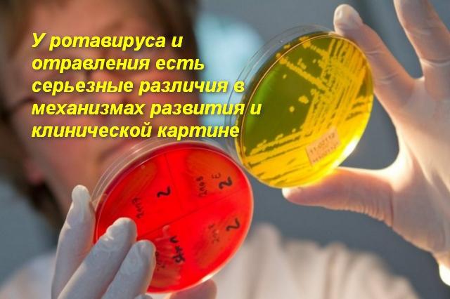 Чем отличается отравление от ротавирусной