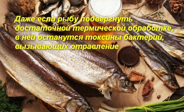 Можно ли отравиться соленой рыбой